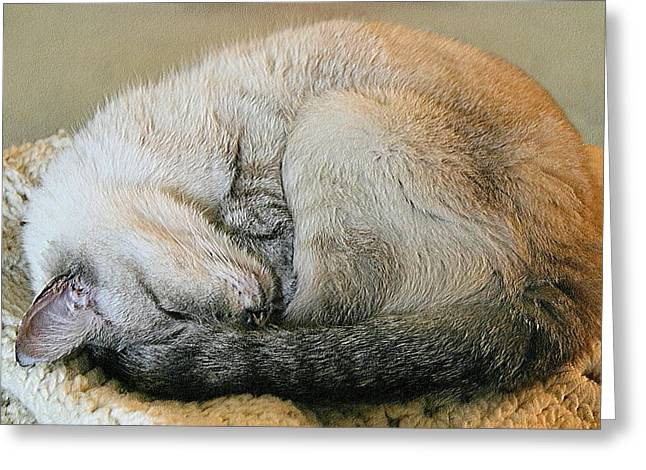 Curled Up Greeting Cards - Snugglepuss Greeting Card by Kristin Elmquist
