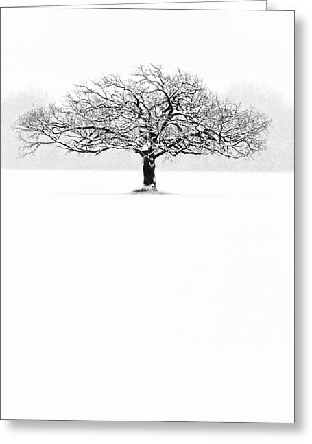 Winter Tree Greeting Cards - So Alone, A Perfect Reflection Of My Empty Soul Greeting Card by Matt Anderson