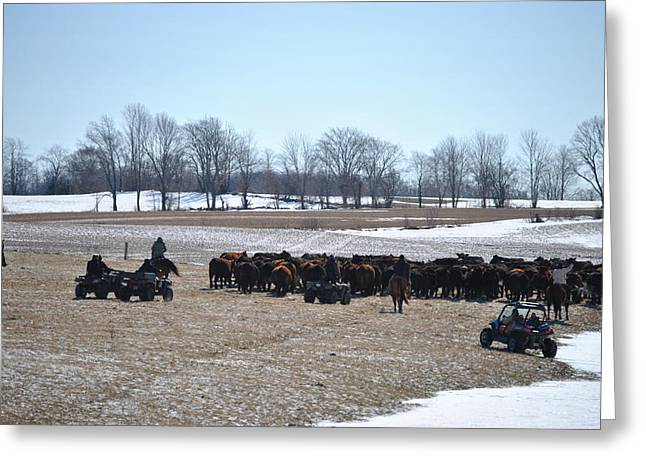 Cattle Run Greeting Cards - So It Begins Greeting Card by Lisa Young