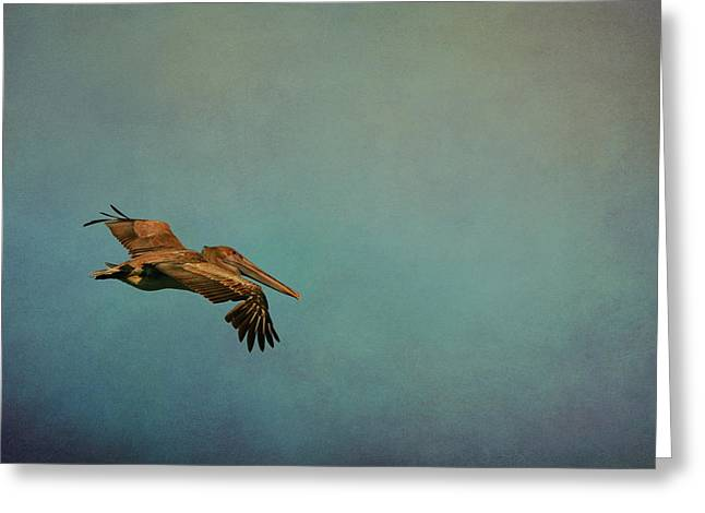 Enhanced Greeting Cards - Soaring Pelican in Late Afternoon Light Greeting Card by Carla Parris