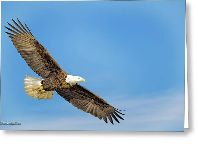 Soar American Bald Eagle Greeting Card by LeeAnn McLaneGoetz McLaneGoetzStudioLLCcom