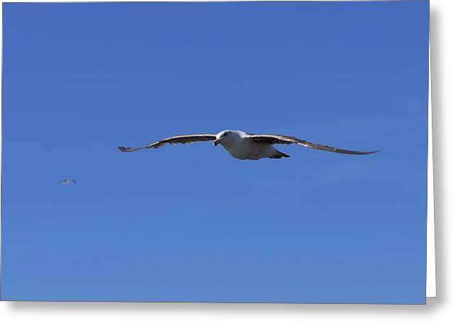 Soar Like A Seagull Greeting Card by Ernie Echols
