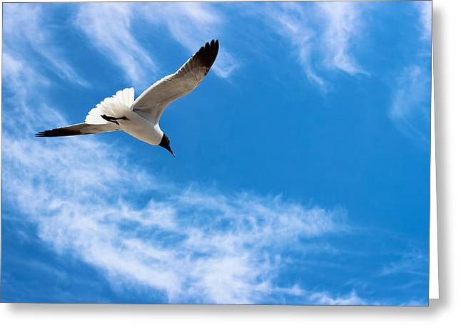 Seabirds Greeting Cards - Soar - Seagull Greeting Card by Colleen Kammerer