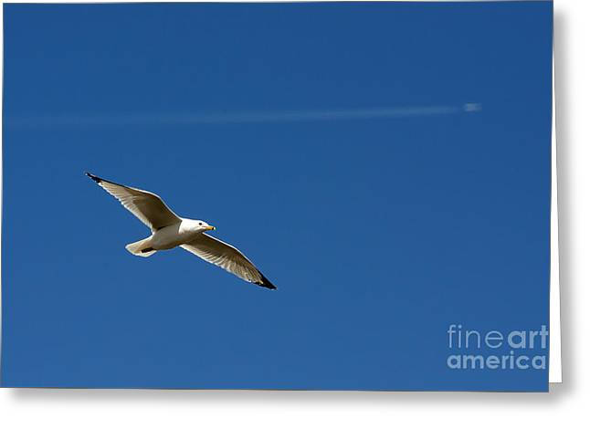Flying Seagull Greeting Cards - Soaring Aspirations 2724 Greeting Card by Ken DePue