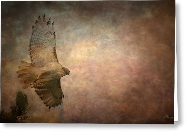Layer Greeting Cards - Soaring Greeting Card by Christine Hauber