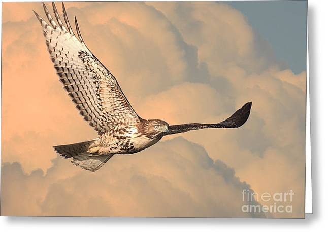 Red-tailed Hawk Greeting Cards - Soaring Hawk Greeting Card by Wingsdomain Art and Photography