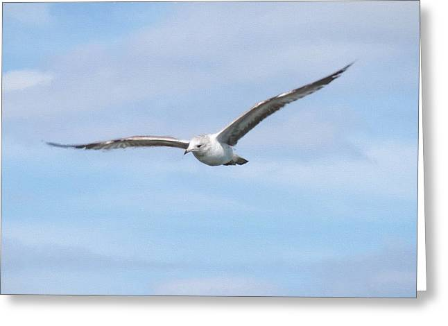 Flying Seagull Greeting Cards - Soaring High 2 Greeting Card by Snowbunny Photography Inc Lissette Corirossi