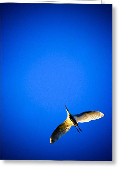 Flying Seagull Greeting Cards - Soaring High Greeting Card by Kerem Hanci