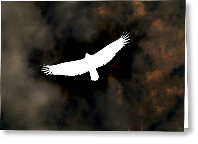 Inverted Greeting Cards - Soaring Greeting Card by Jeff Bord
