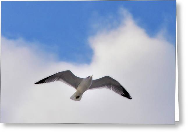 Soaring Seagull Greeting Card by Bill Cannon