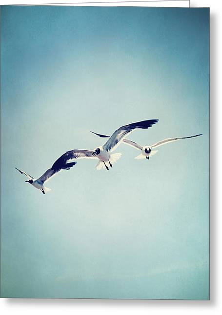 Flying Seagull Greeting Cards - Soaring Seagulls Greeting Card by Trish Mistric