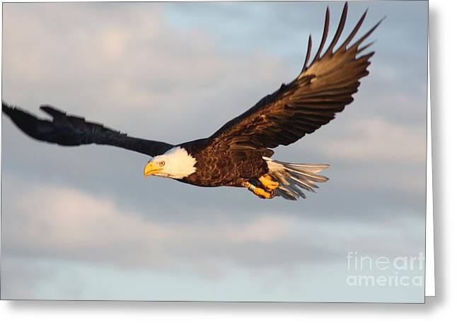 Eagle In Clouds Greeting Cards - Soaring with Purpose Greeting Card by Dave Knoll