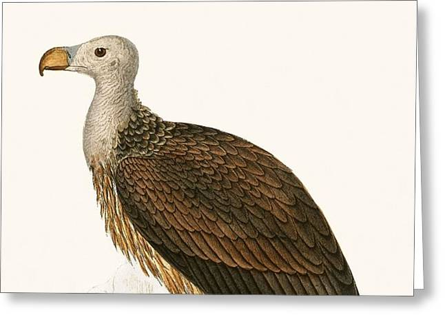 Sociable Vulture Greeting Card by English School