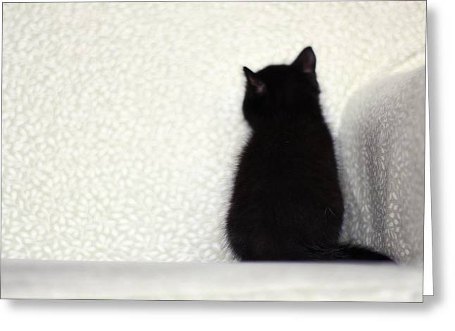 Photo Art Gallery Greeting Cards - Sitting Kitty Greeting Card by Amy Tyler
