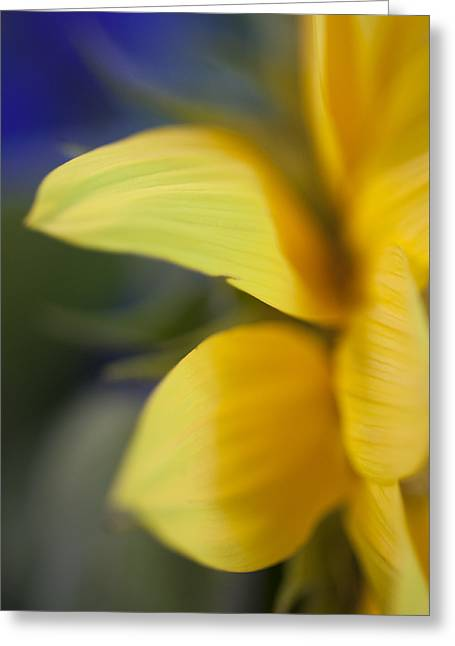 Pointy Petals Greeting Cards - Soft and Sunny Greeting Card by Christi Kraft