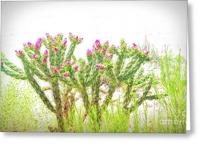 Soft Bloom Greeting Card by Jon Burch Photography