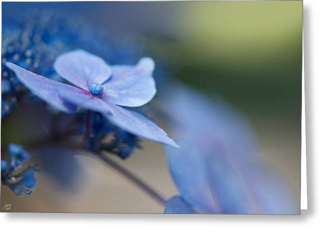 Flower Blossom Greeting Cards - Soft Blue Moment Greeting Card by Lisa Knechtel