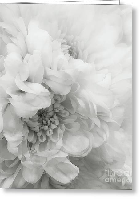 Enhanced Greeting Cards - Soft Dahlia White Greeting Card by Arlene Carmel