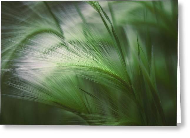 Soft Grass Greeting Card by Scott Norris