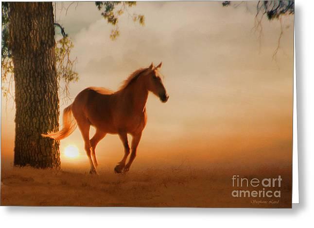 Soft Light Greeting Cards - Soft Light Greeting Card by Stephanie Laird