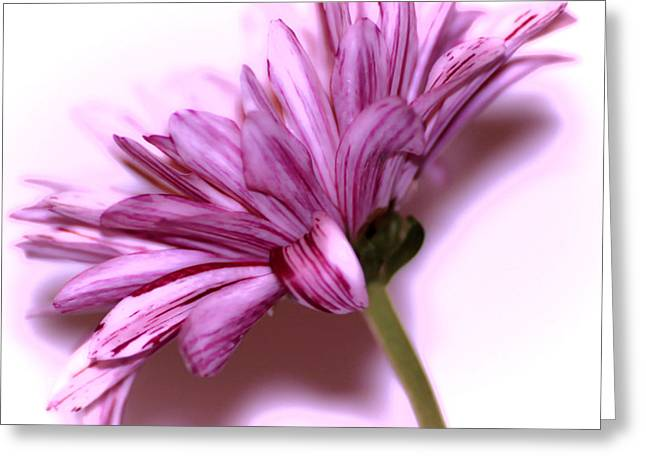 Vivid Colour Greeting Cards - Soft petals Greeting Card by Martin Newman