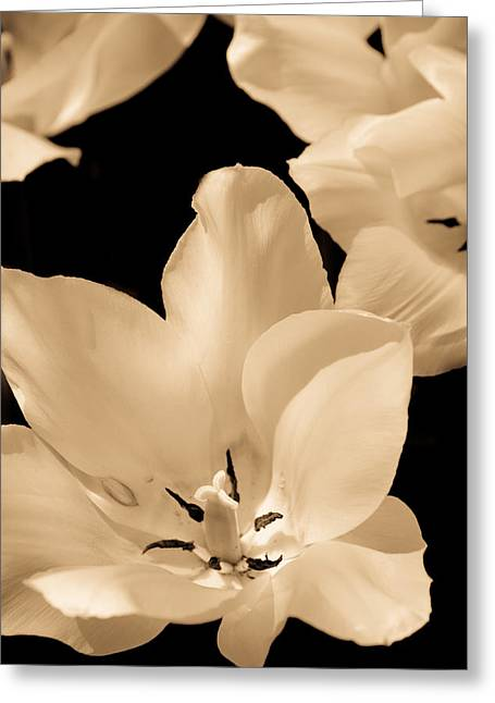 Soft Petals Greeting Card by Trish Tritz