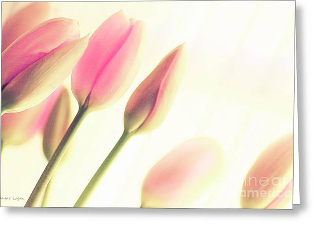 Artography Greeting Cards - Soft Pinks Tulips Greeting Card by Jayne Logan Intveld
