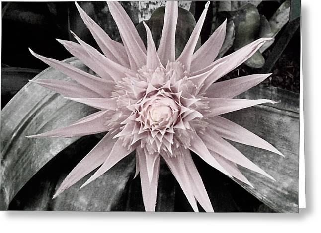 Soft Tint Pink And Green Bromeliad Greeting Card by Elaine Plesser