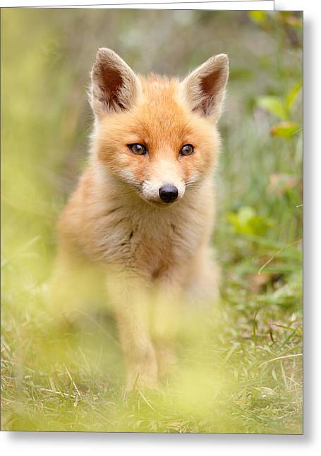 Suckling Greeting Cards - SoftFox Greeting Card by Roeselien Raimond