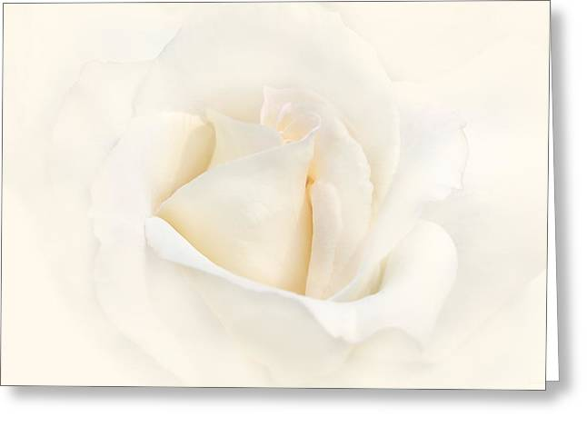 Softness Of An Ivory Rose Flower Greeting Card by Jennie Marie Schell