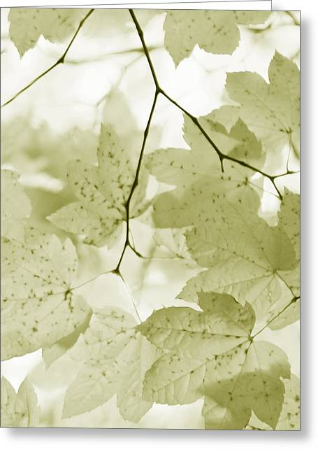 Olive Green Greeting Cards - Softness of Olive Green Maple Leaves Greeting Card by Jennie Marie Schell