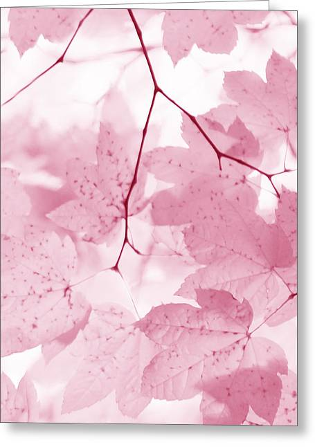 Light And Dark Greeting Cards - Softness of Pink Leaves Greeting Card by Jennie Marie Schell