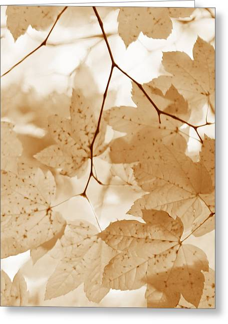 Beige Abstract Greeting Cards - Softness of Rusty Brown Leaves Greeting Card by Jennie Marie Schell