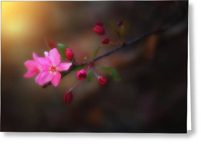 Pink Blossoms Greeting Cards - Softness of Spring Greeting Card by Darren  White