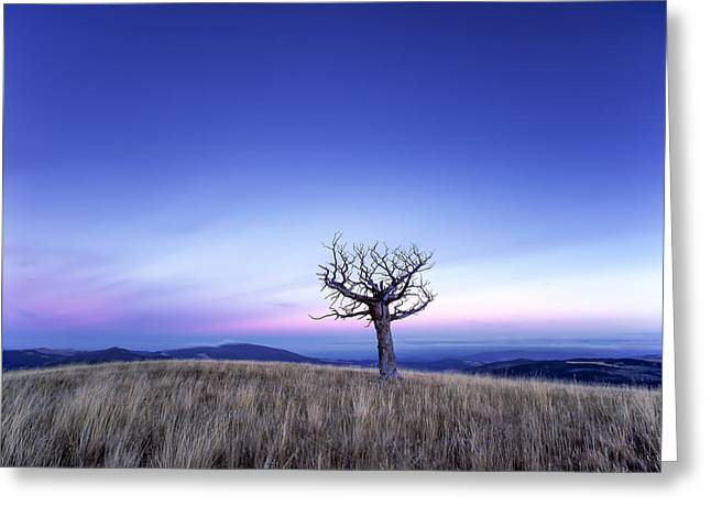 Solace And Grace Greeting Card by Leland D Howard