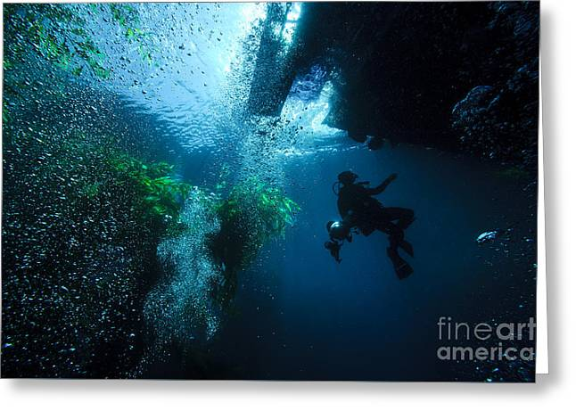 Underwater Photos Paintings Greeting Cards - Soldiers near beds of kelp on the sea floor Greeting Card by Celestial Images