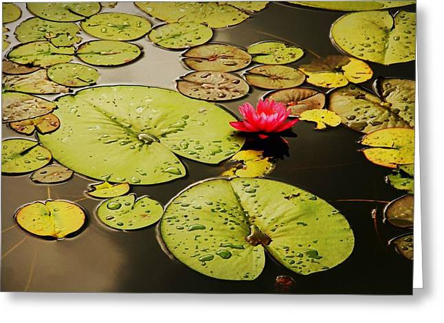 Sole Lily Greeting Card by Diana Angstadt