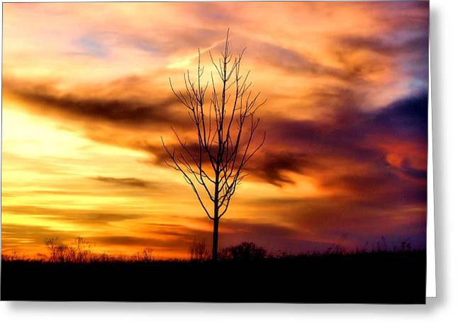 Fantasy Tree Art Greeting Cards - Sole Searching Greeting Card by Karen M Scovill