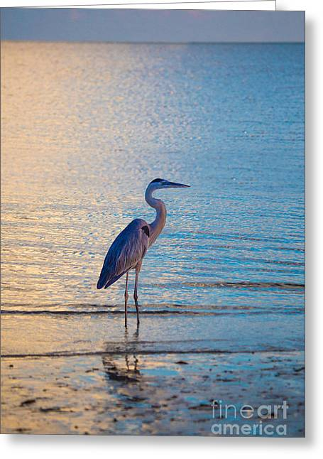 Flying Seagull Greeting Cards - Solitary Bird by Darrell Hutto Greeting Card by Darrell Hutto
