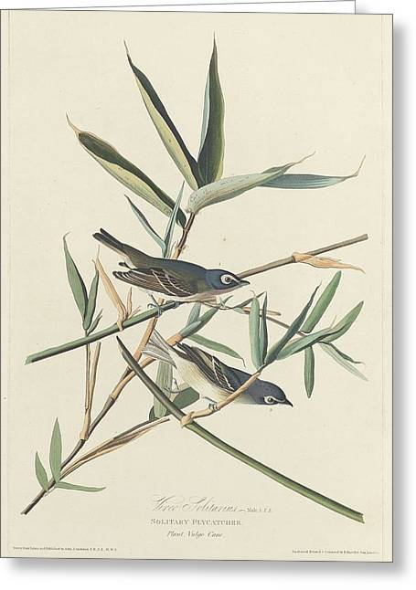 Small Bird Greeting Cards - Solitary Flycatcher Greeting Card by John James Audubon