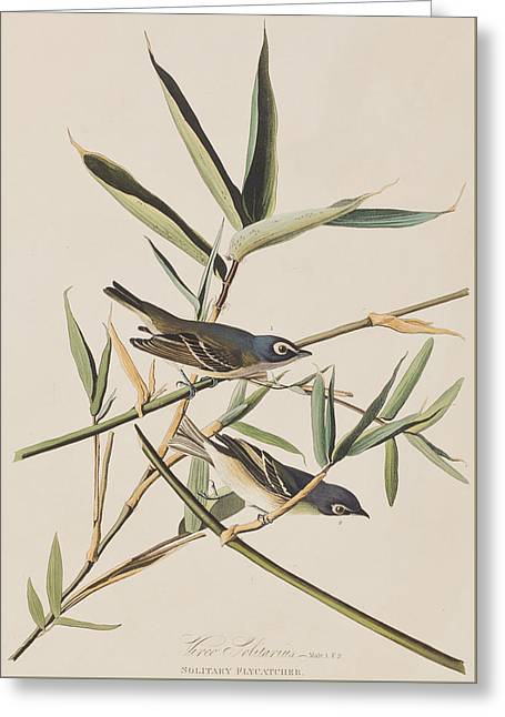 Flycatcher Greeting Cards - Solitary Flycatcher or Vireo Greeting Card by John James Audubon