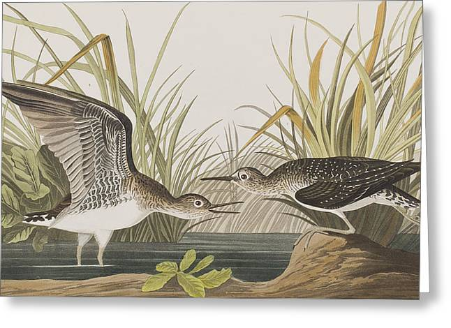 Sandpipers Greeting Cards - Solitary Sandpiper Greeting Card by John James Audubon