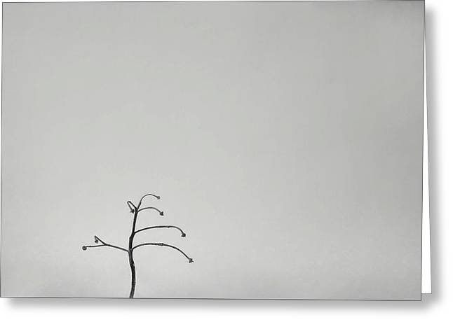Solitary Greeting Card by Scott Norris