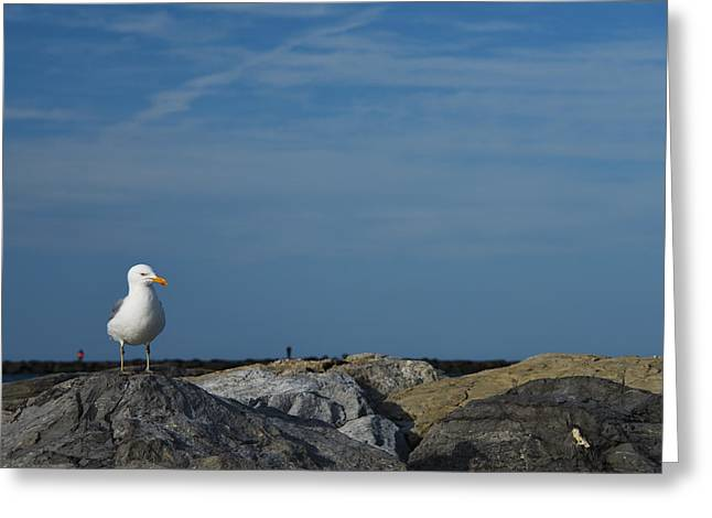 Migratory Bird Greeting Cards - Solitary Seagull Greeting Card by Jennifer Lyon