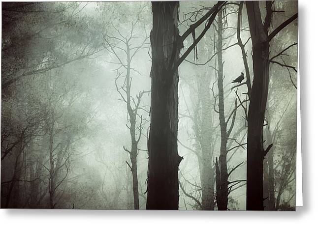 Solitude Greeting Card by Amy Weiss