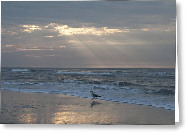 Solitude Greeting Card by Bill Cannon