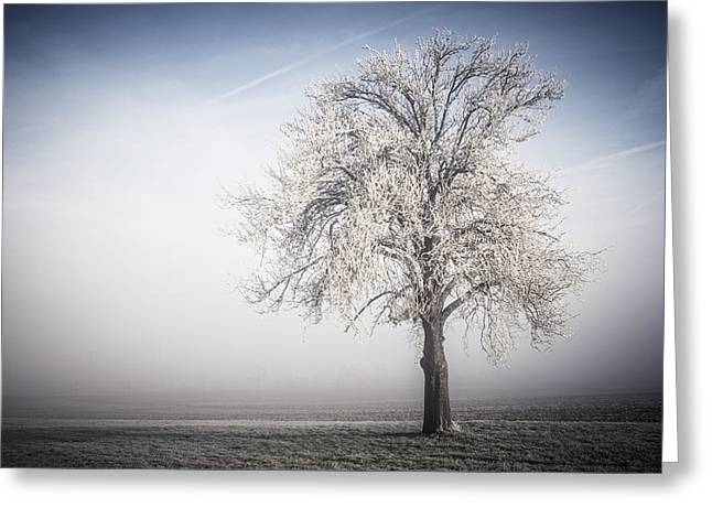Deutschland Greeting Cards - Solitude Frost Greeting Card by Miguel Winterpacht