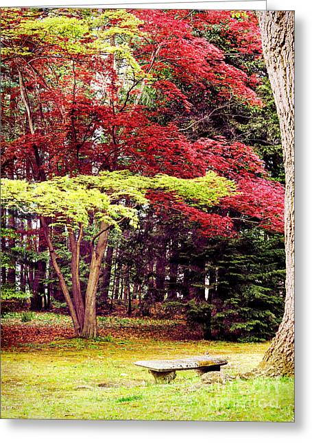 Quiet Greeting Cards - Solitude Greeting Card by HD Connelly