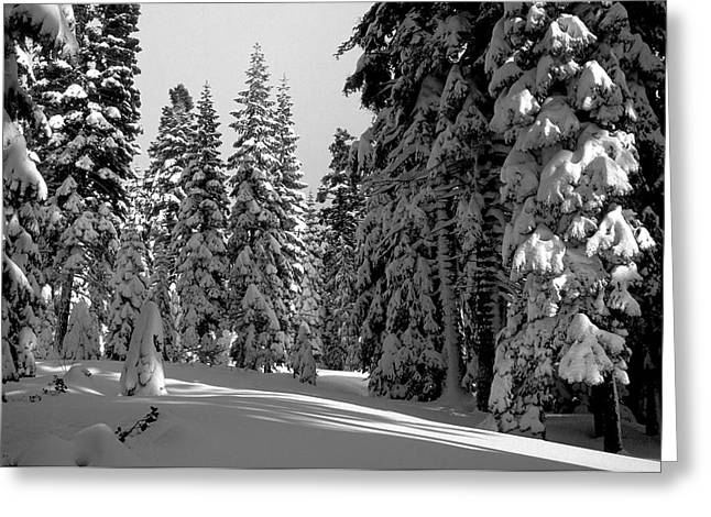 Snow Tree Prints Greeting Cards - Solitude Greeting Card by Kathy Yates