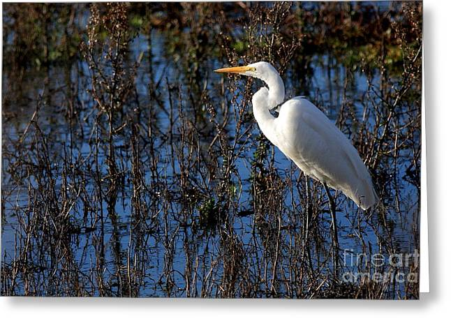 Egret Greeting Cards - Solitude Greeting Card by Wingsdomain Art and Photography